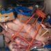 Interceptan en Tierra Estella 1200 Kg de carne destinada al consumo humano transportada sin las condiciones sanitarias necesarias
