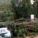 Muere un perro al caer un árbol sobre un vehículo en una zona prohibida de Alloz